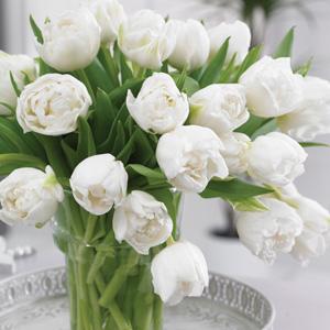 Tulip White Heart