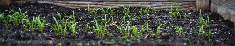 Soil Growth