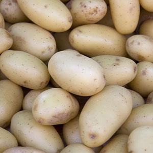 Potato White Star Pkcspwst 2020