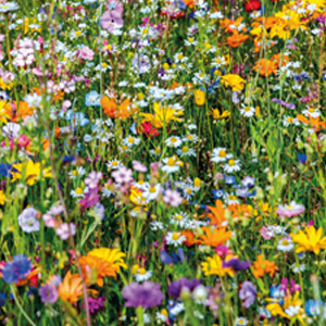 Seed – Beneficial Insect Mix