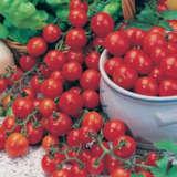 Seed – Tomato Tiny Tom