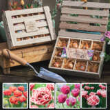Tulip Double Fringed Wooden Tea Box Collection