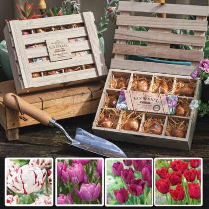Tulip Novelty Wooden Tea Box Collection