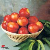 Nectarine May Grand