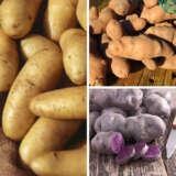 Seed Potato Salad Collection