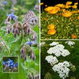 Companion Planting Collection