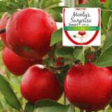 Dwarf Apple Montys Surprise (pbr)
