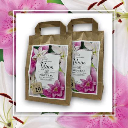 Lilium Pink White 600x600