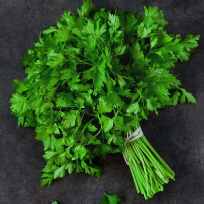 Herb Parsley Italian