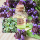Herb Self Heal