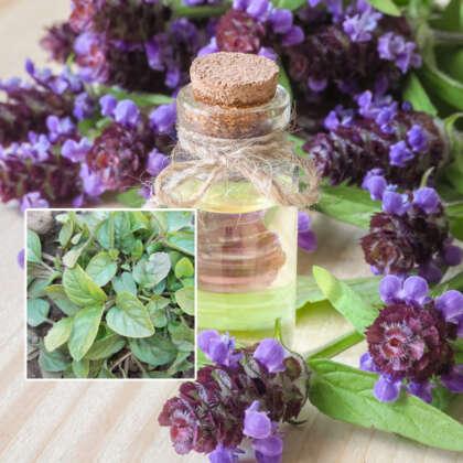 Herb Self Heal