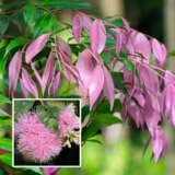 Syzygium Cascade (pbr)