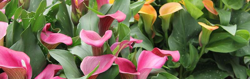 - Garden Express Australia