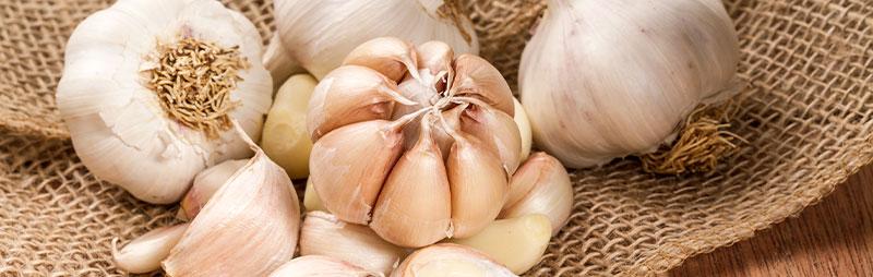 Header Garlic - Garden Express Australia