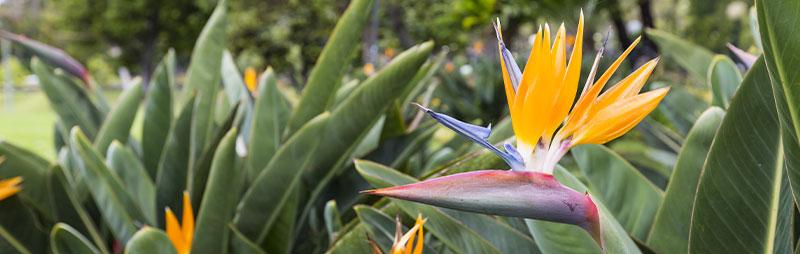 Header Bird Of Paradise - Garden Express Australia