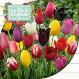 Pre-order Spring Bulbs