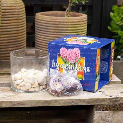 Gurus Vase Kit On Pebbles- Hyacinth Blue