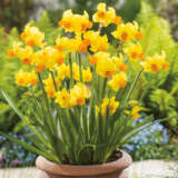 Daffodil Bittern