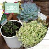 Gurus Succulents