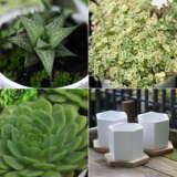 Gardengurus Succulents Collection2