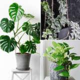 Gurus Indoor Plant Collection 1