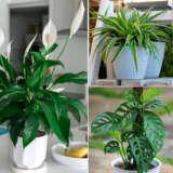 Gurus Indoor Plant Collection 2