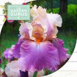 Gurus Bearded Iris