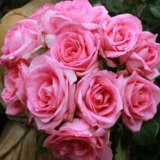 Rose Perfume Passion (pbr)