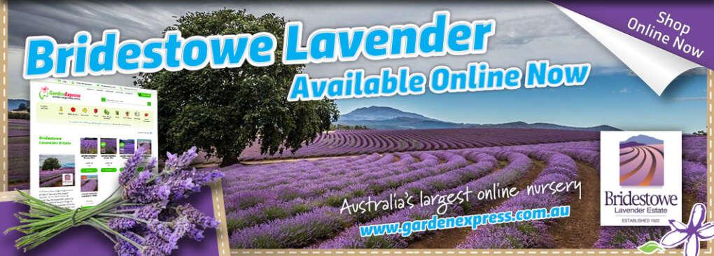 Bridestowe Lavender Slider