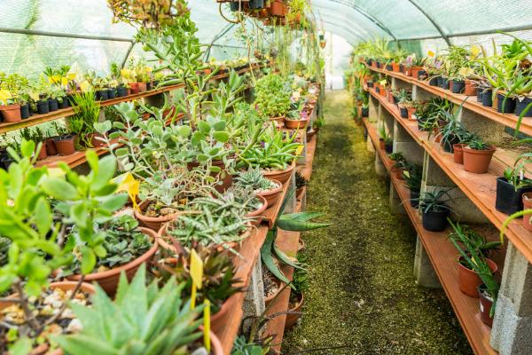 Frost Tolerant Succulents