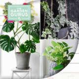 Gurus Indoor Plants