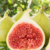 Genoa White Fig