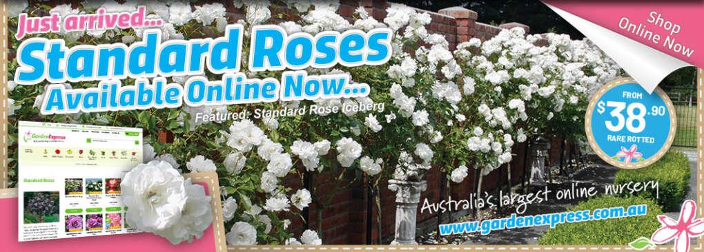 Standard Roses Slider