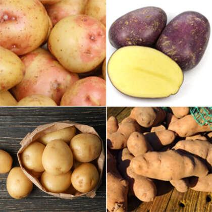 Cert Seed Potato Winter Sp 1 Colcspws1 - Garden Express Australia