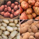 Cert Seed Potato Winter Special 2 Colcspws2 - Garden Express Australia