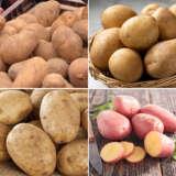 Cert Seed Potato Winter Special 3 Colcspws3 - Garden Express Australia