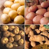 Cert Seed Potato Winter Special 4 Colcspws4 - Garden Express Australia