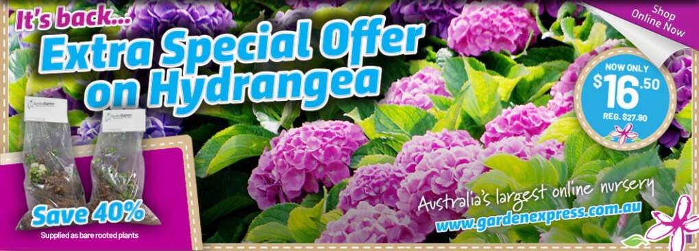 Hydrangea Slider - Garden Express Australia