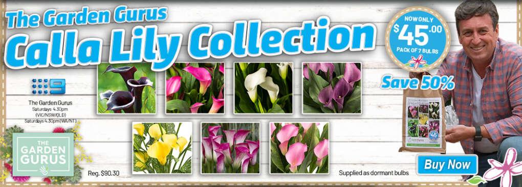 Ge Gurus Callalilies Slider - Garden Express Australia