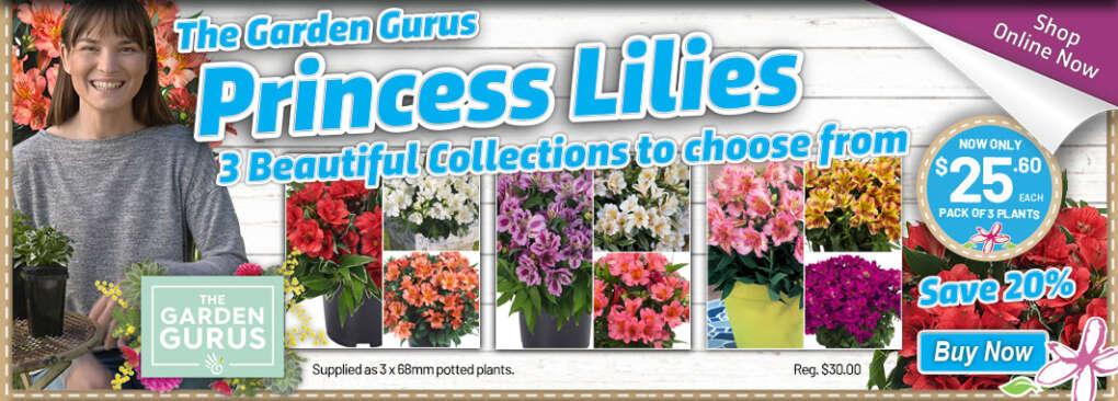 Ge Gurus Princesslilies Slider - Garden Express Australia