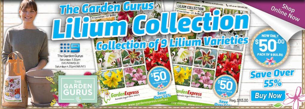 Ge Gurus Lilium Slider - Garden Express Australia