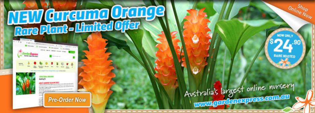 Curcuma Orange Slider 1024x367 2021 - Garden Express Australia