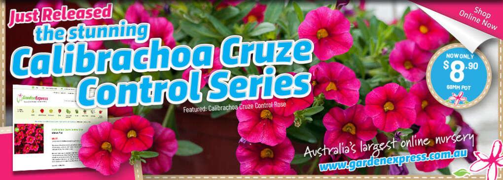 Calibrachoa Slider - Garden Express Australia