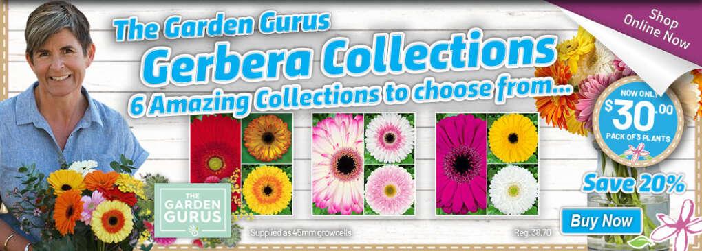Gurus Gerbera Slider - Garden Express Australia