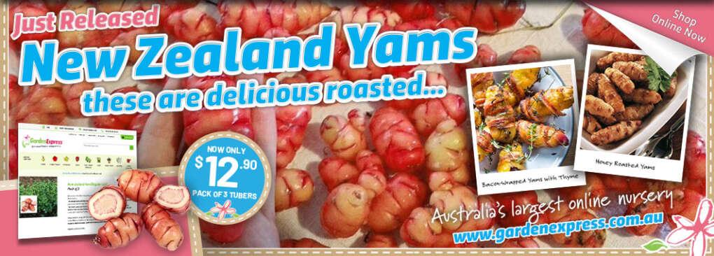 Yam Slider - Garden Express Australia
